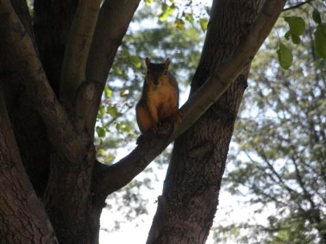 little squirrel friend
