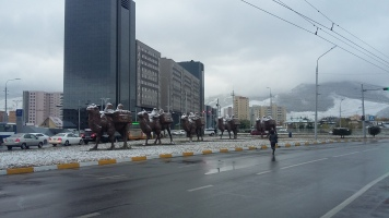 The camel caravan sculpture that showed up over the summer.