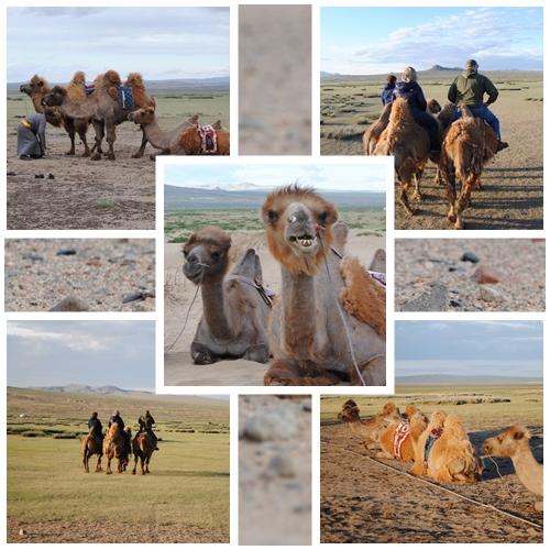crunchyside camels